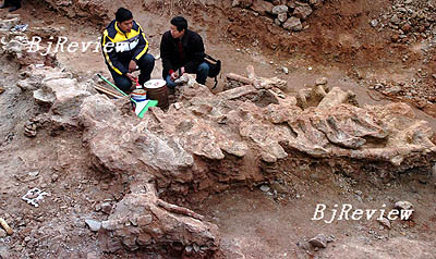 DISCOVERY: The Dragon Bone Collectors -- Beijing Review